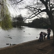 """If you throw stones at the ducks daddy will not be happy."""
